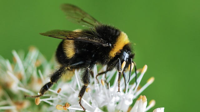 CATCH THE BUZZ – The More of Some Pesticides Bees Eat, The More They Like Them.