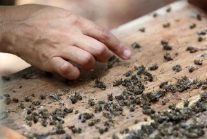 CATCH THE BUZZ – Millions of Dead Bees Devastate Mexican Beekeepers' Business