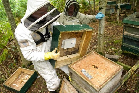 CATCH THE BUZZ – Irish Agtech Company That Monitors Honey Bee Colonies Expands Into US