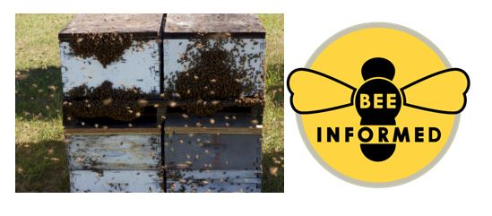 CATCH THE BUZZ – Right Now, Bee Informed Needs Your Help!