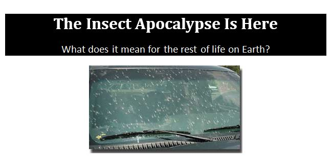 CATCH THE BUZZ – The Insect Apocalypse Is Here. Here's the Rest of the Story.