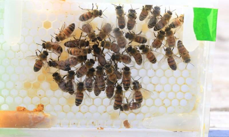 CATCH THE BUZZ – Make Sure the Workers are Fed, and They'll Take Care of the Queen.