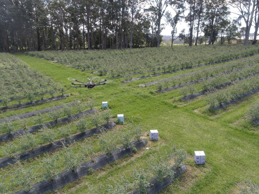 CATCH THE BUZZ – UND and Australian Company Partner to Improve Crop Yields with Better Pollination