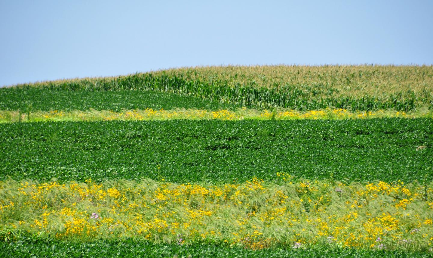 CATCH THE BUZZ – Prairie Strips Transform Farmland Conservation Converting Low-Profit Land Brings Big Returns.