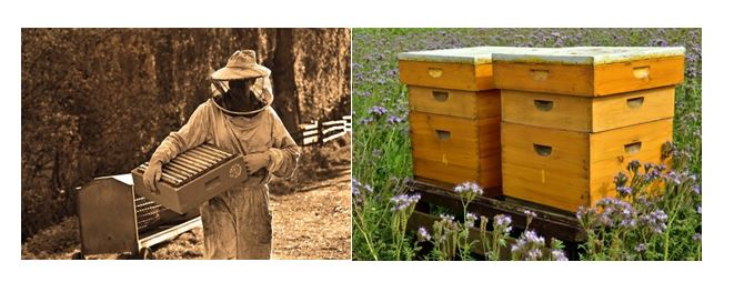CATCH THE BUZZ – It's All About the Bees: Displaced Workers Find Jobs Within an Appalachian Tradition