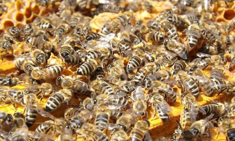 CATCH THE BUZZ – Students Create Probiotic to Help Honeybees Fight Deadly Fungus.