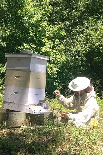 CATCH THE BUZZ – Earning a Bee's Wings. In Hives, Graduating to Forager a Requirement for Social Membership it is a Classic Coming-of-Age Story, in Many Ways.