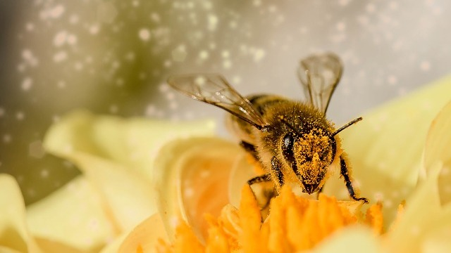 CATCH THE BUZZ – Microscopic Nanocrystals, the Size of Pollen Grains, Used to Track the Path of Pollen from Flower to Flower.