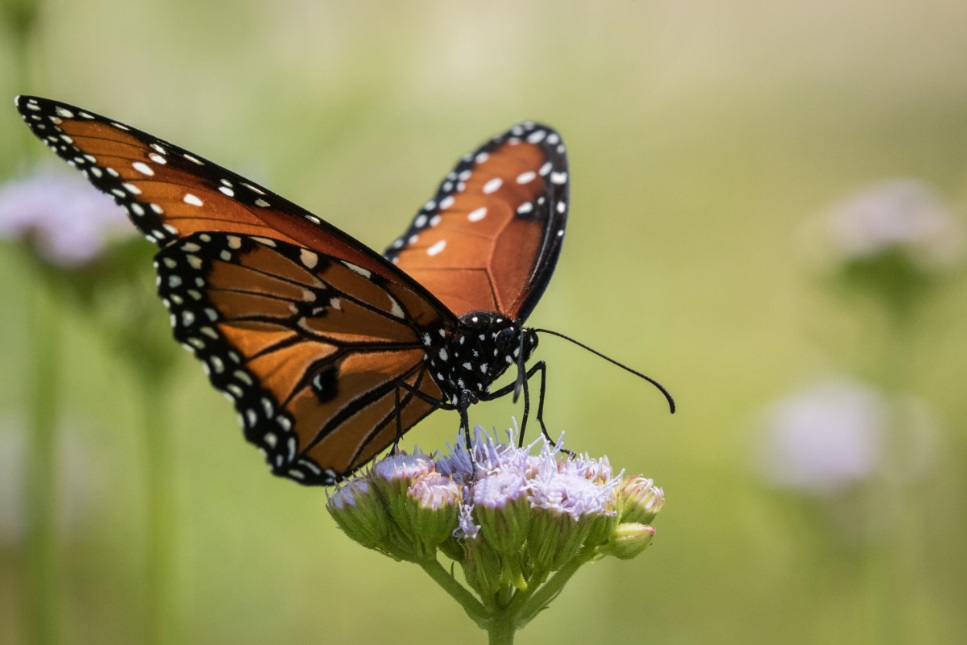 CATCH THE BUZZ – Urban Gardens and Allotments Provide Especially Good Habitat for Pollinator Communities.