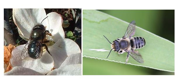 CATCH THE BUZZ – Male and Female Bees Have Different Reactions to Pesticide Exposure.