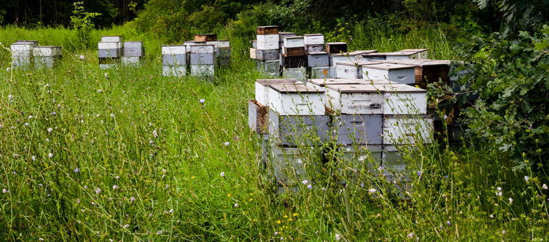 CATCH THE BUZZ – Take the BIP Colony Loss Survey this Week. Time is Running Out!