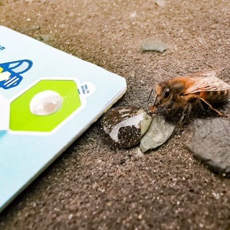 CATCH THE BUZZ – A Credit Card That Carries Bee Food. Yes, Now You Have Seen Everything!