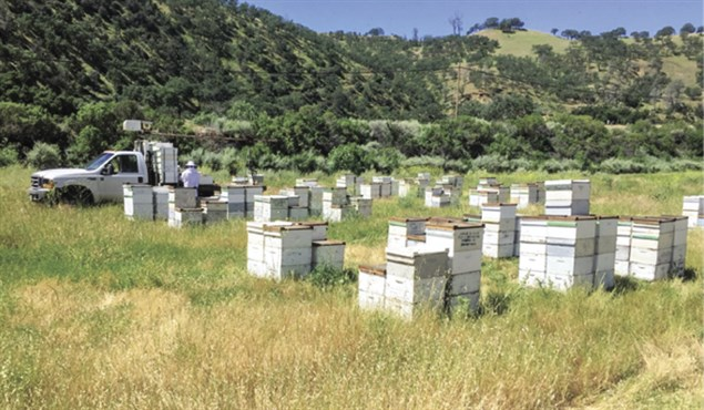 CATCH THE BUZZ – California Honey Crop A Mixed Bag This Year. Here's Why.