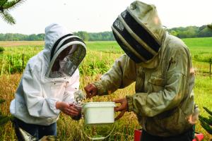 Save Lives! Monitor Hives!