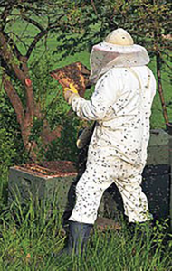 A Honey Bee's Guide To Managing Beekeepers