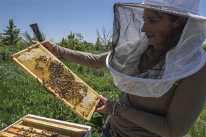 Sustainable Beekeeping (Never Buy Bees Again. Part 2)