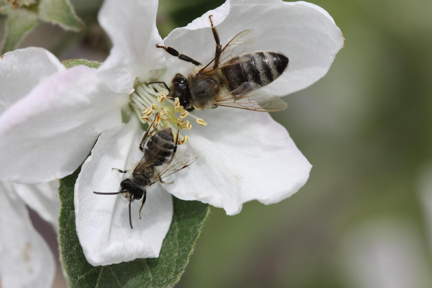 CATCH THE BUZZ – New Research Suggests That Global Trends in Farming Practices are Undermining POLLINATORS.