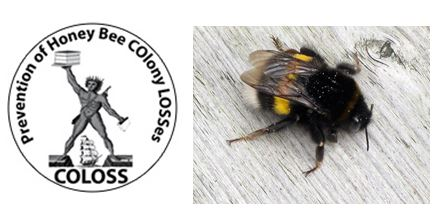CATCH THE BUZZ – COL0SS at Apimondia Elects Officers, and, Bumblebee Males Make Bumblebee Queens Blind, For A While.