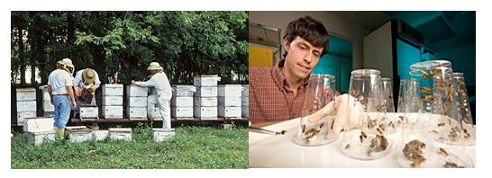 CATCH THE BUZZ – Weak Honey Bee Colonies May Fail from Cold Exposure During Shipping, and, a Gene fix for Nosema? Maybe…