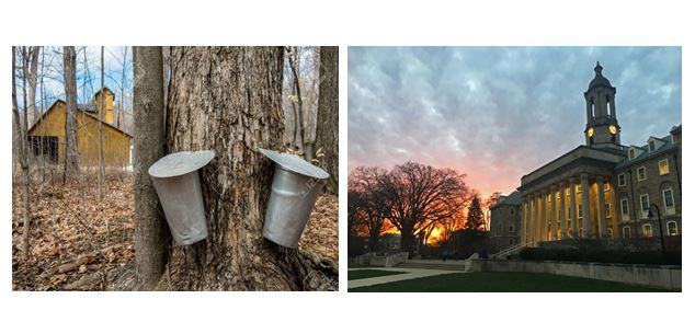 CATCH THE BUZZ – Climate Change Study Finds That Maple Syrup Season May Come Earlier, and, Studying Bees at Penn State.