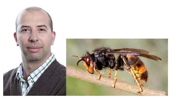 CATCH THE BUZZ – Canada's York University to Develop 'BeeCSI' Tool to Help Canada's Rapidly Declining Honey Bees, and, BBKA on Guard for Asian Hornet