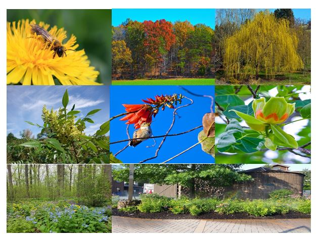 CATCH THE BUZZ – Biodiversity Improves Crop Production, and, Trees for Bees Stems Climate Change.