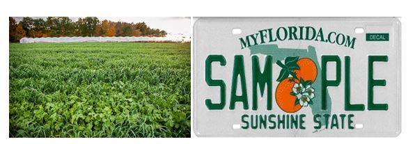 CATCH THE BUZZ – Free Planting Guides for Farmers Planting Cover Crops, and, Florida Wants a Honey Bee License Plate.
