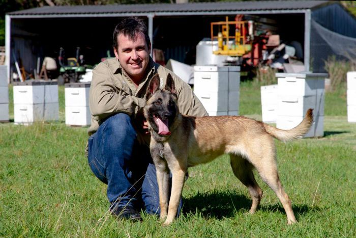 CATCH THE BUZZ- Family Pet in Training as Detector Dog to Prevent Devastating Bee Disease American Foulbrood.