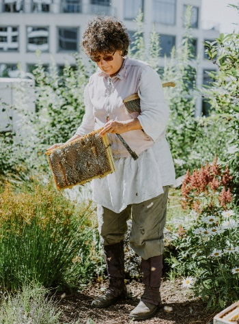 CATCH THE BUZZ – Fairmont Waterfront Hotels in Vancouver has 40,000 Bees