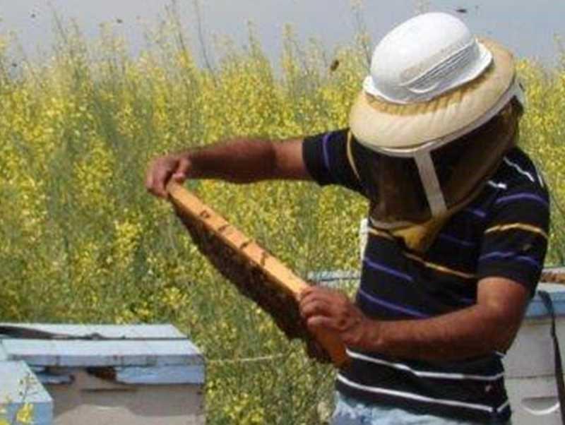 CATCH THE BUZZ – No Honey Bees, No Business