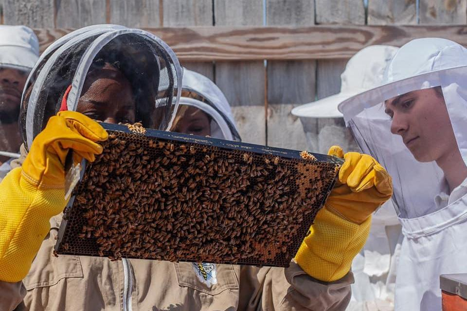 CATCH THE BUZZ – Beekeeping Sweetens Depressed Economy