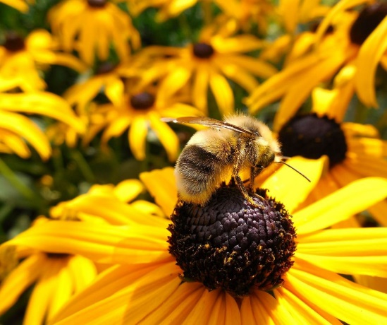 CATCH THE BUZZ – Buzz- Blaming Farming Practices