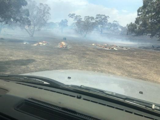 CATCH THE BUZZ – Aussie Fires Destroy Bees.