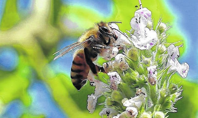 CATCH THE BUZZ – Helping Honey Bees Survive