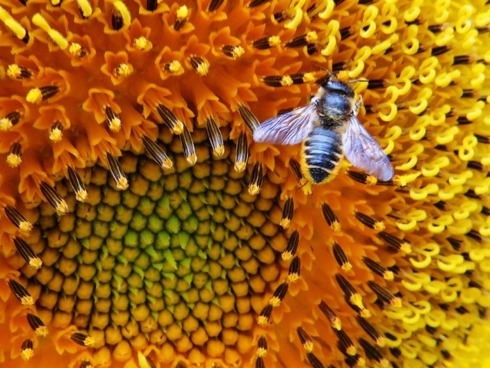 CATCH THE BUZZ – Pollinators in Action: Flowering Journeys