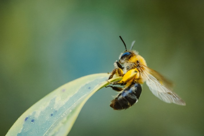 CATCH THE BUZZ- Neonics Driving Increase in Honey Bee Toxicity