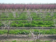 CATCH THE BUZZ – Almond Orchards and Sustainable Beekeeping