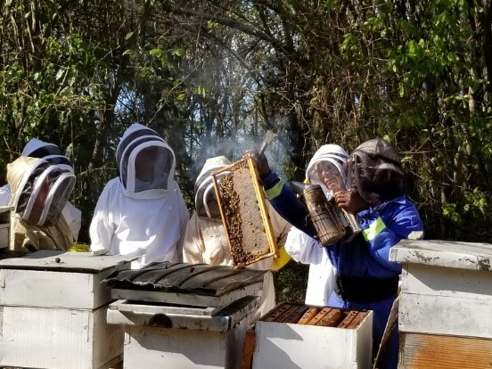 CATCH THE BUZZ- Beekeeping Safari in the Caribbean