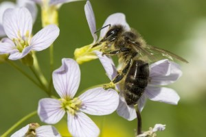 CATCH THE BUZZ – USDA Honey Bee Research Focus