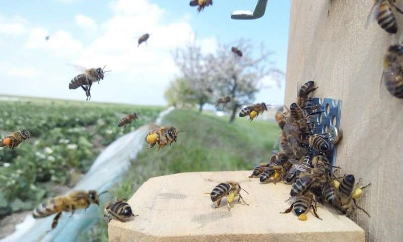 CATCH THE BUZZ – Strawberries and Honey Bees