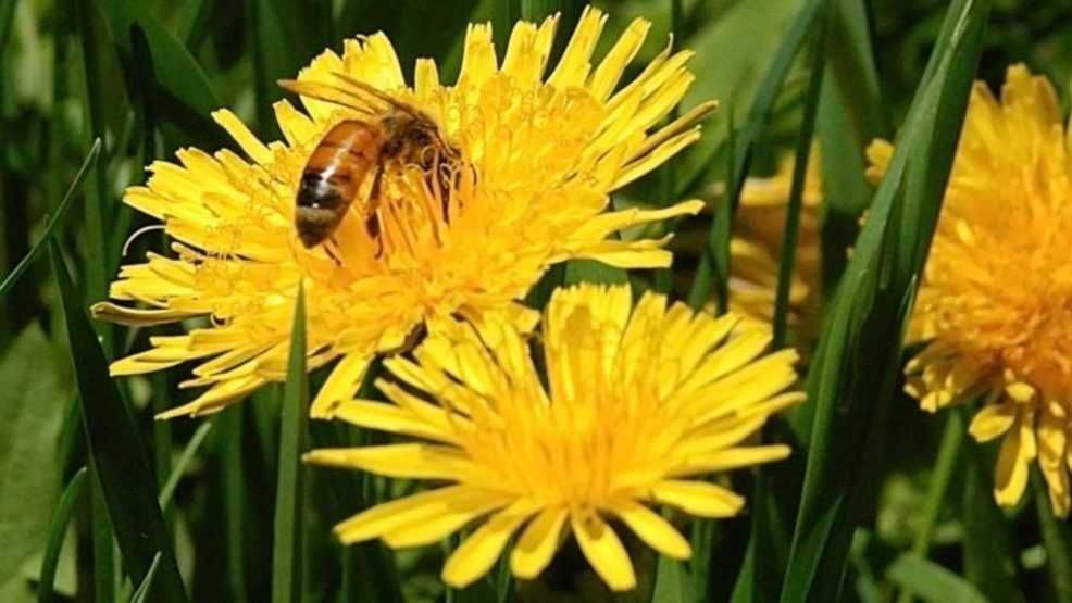 CATCH THE BUZZ – Sentinel Apiary Program…Maine Beekeepers
