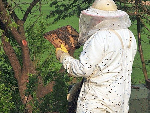 CATCH THE BUZZ – Commercial Beekeeping, Its Not About Honey