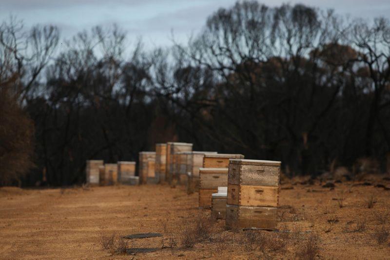 CATCH THE BUZZ – Millions of Bee Deaths Threaten Australia's Almond Harvest.
