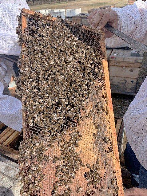 CATCH THE BUZZ – Mushroom Extract for Honey Bees