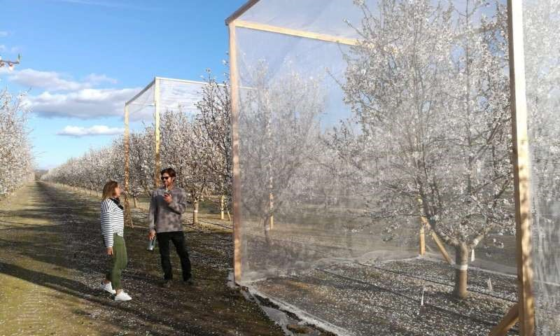 CATCH THE BUZZ – Self Pollinating Almonds??