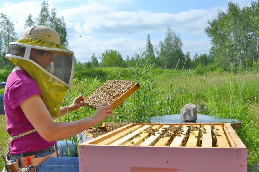 CATCH THE BUZZ – Funding Boosts Beekeeping in Canada