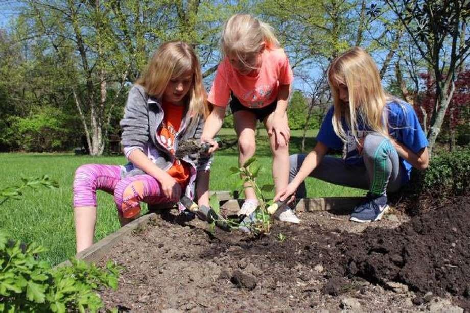 CATCH THE BUZZ – Start Gardening with Pollinator Plants