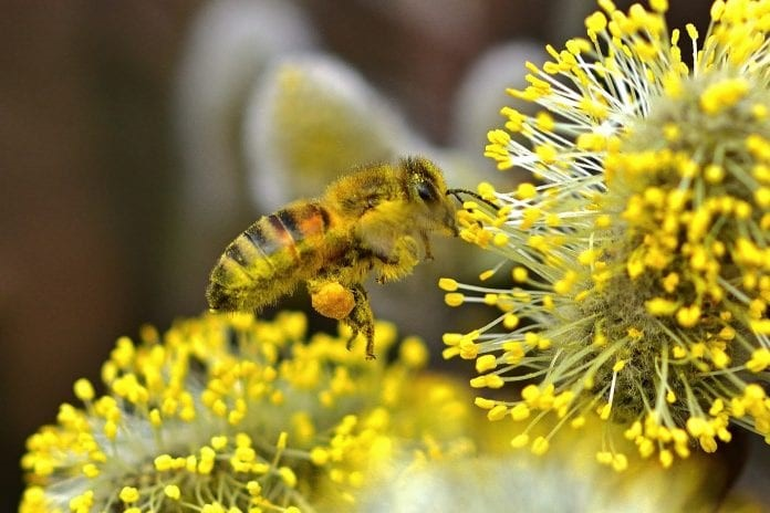 CATCH THE BUZZ – Colorful Intricacies of Pollen
