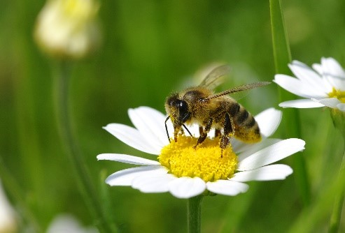 CATCH THE BUZZ – World Bee Day!
