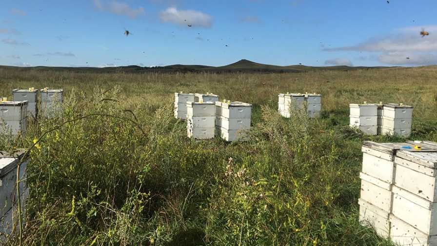 CATCH THE BUZZ – Honey Bees in Cold Storage